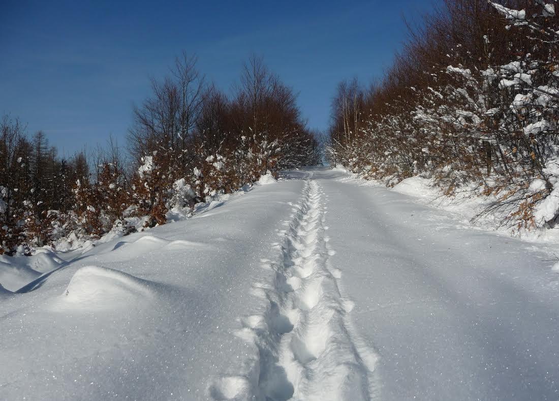 Beh  Zimný tréning - základ bežeckej prípravy  088e678e490
