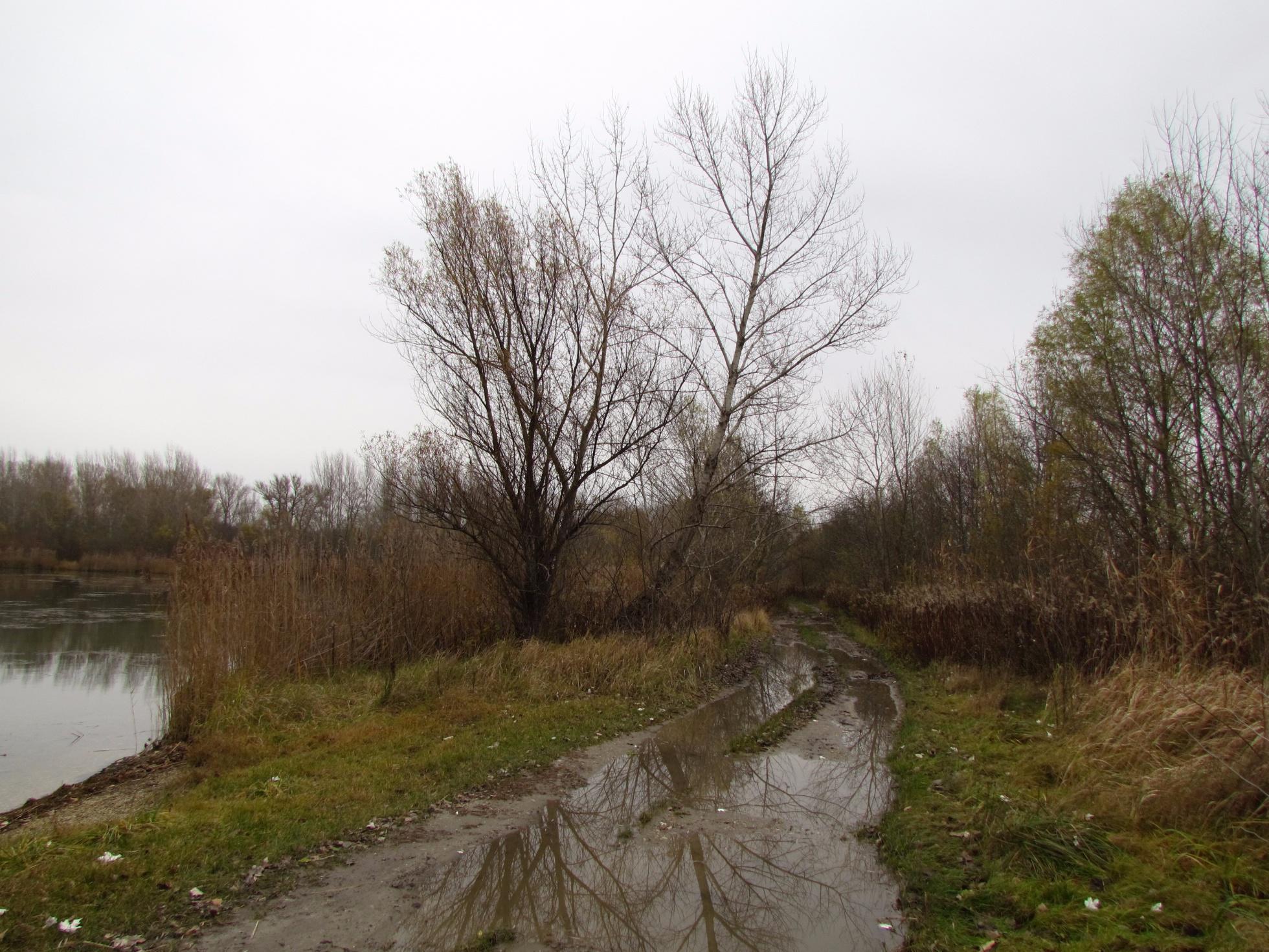 e60f8fb169663 Túra: Lužným lesom Bratislavy | HIKING.SK
